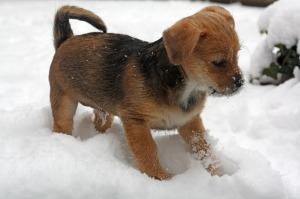 puppy-487960_1280