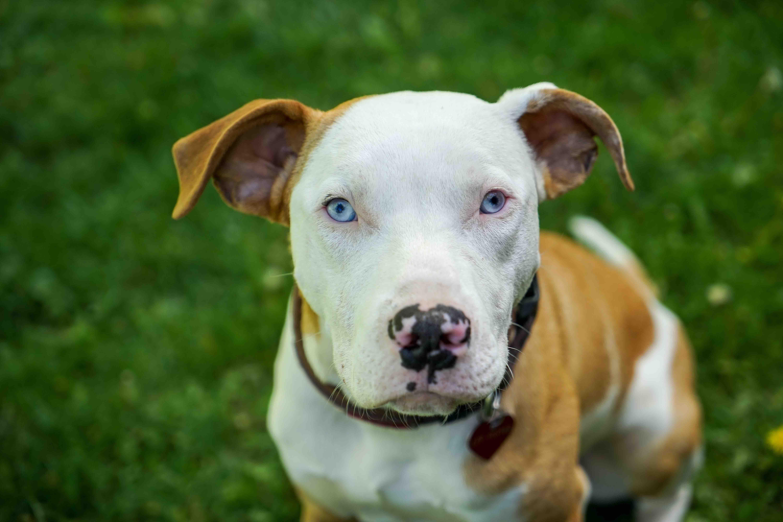 Dog Bites Category Archives — San Diego Injury Law Blog